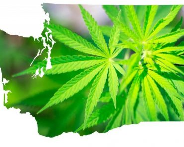 Washington State Cannabis